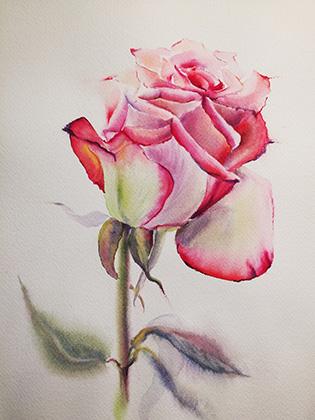 Розы акварелью рисунки